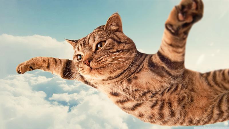Funny-Cats-October-20151